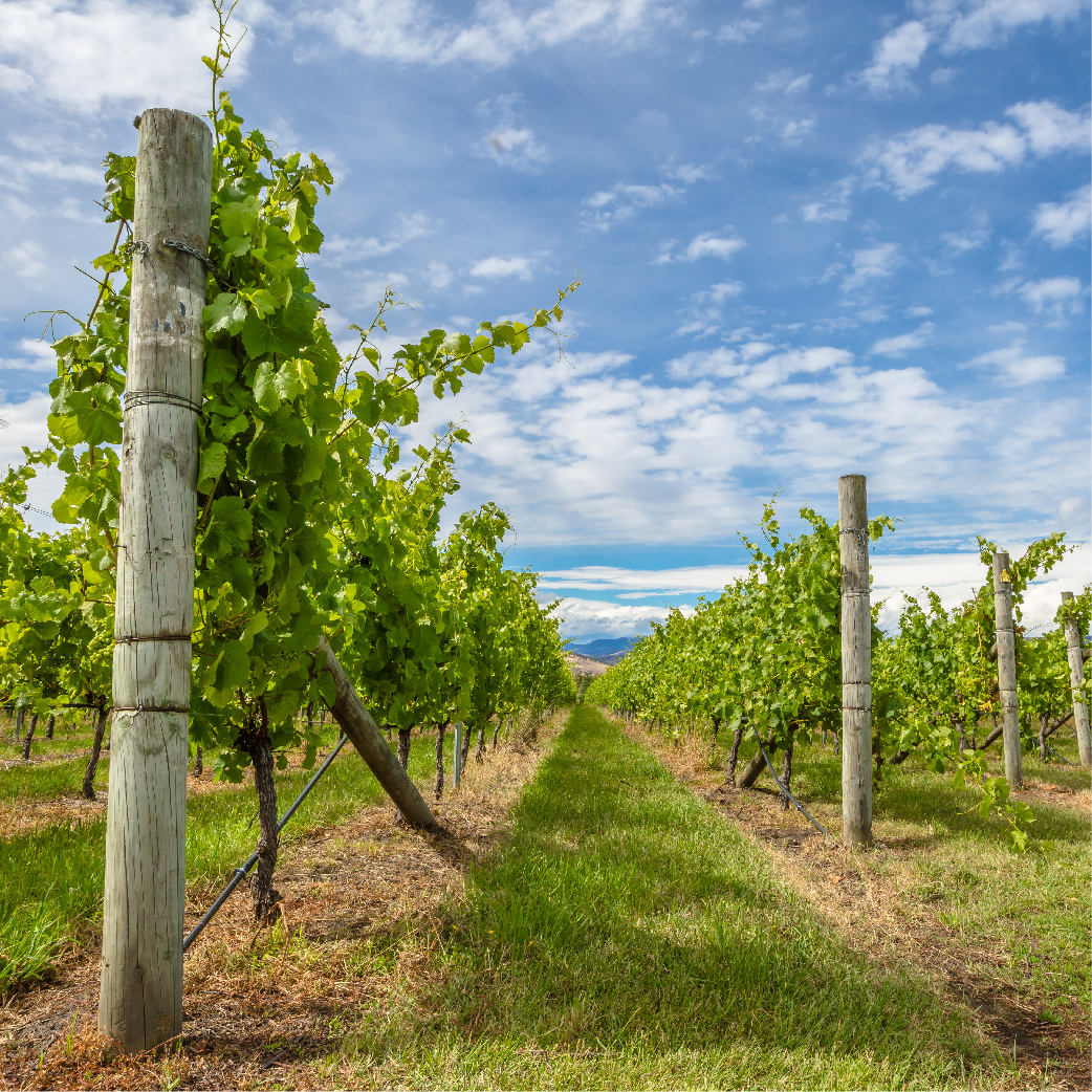 delamere vineyard individual analysis Delamere vineyard case study solution, delamere vineyard case study analysis, subjects covered operations management quality control by jonathan west source: harvard business school 21.