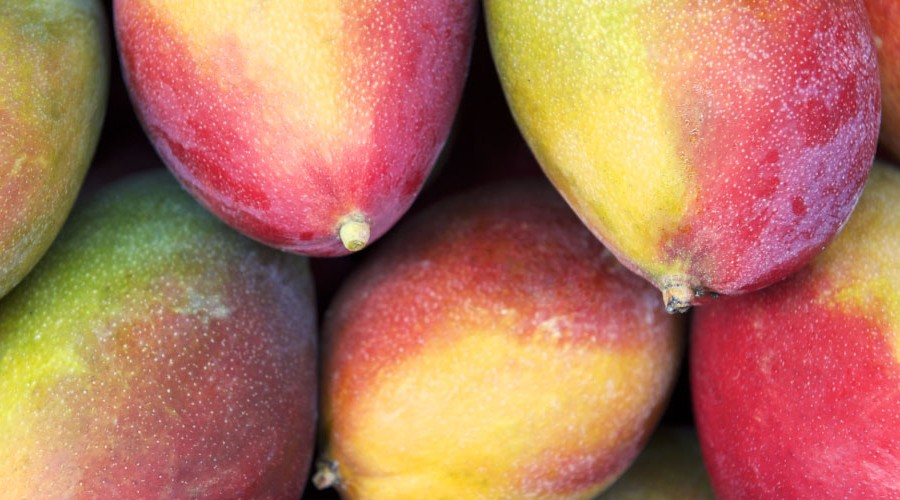 Australian Mango Growers Ready for Major Shipments to US