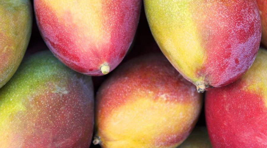 Australian Mango Growers Ready for Major Shipments to US